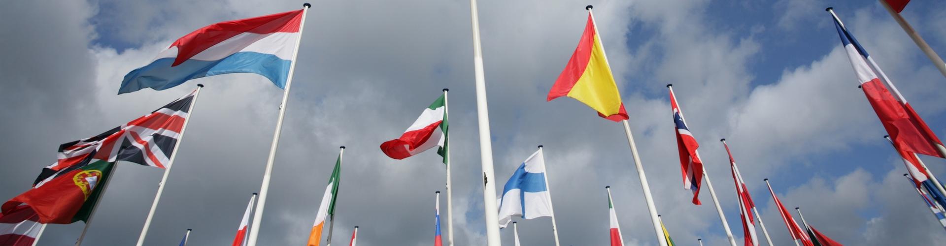 A műszaki, gazdasági fordítások és a kelet-közép-európai nyelvek szakértője